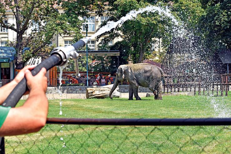 zoo vrt