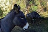 magarac i emu