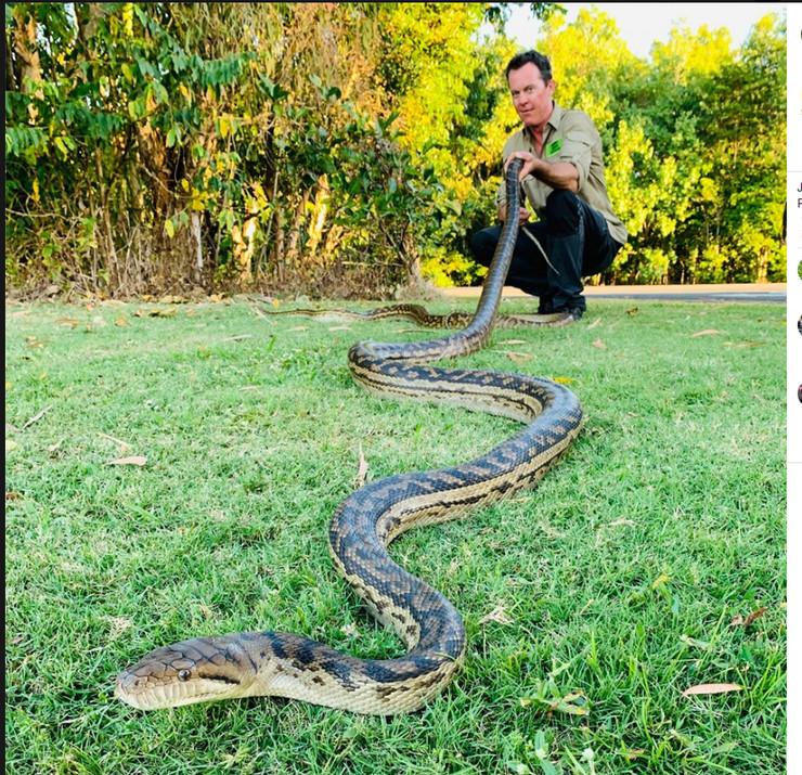 zmije propale kroz plafon