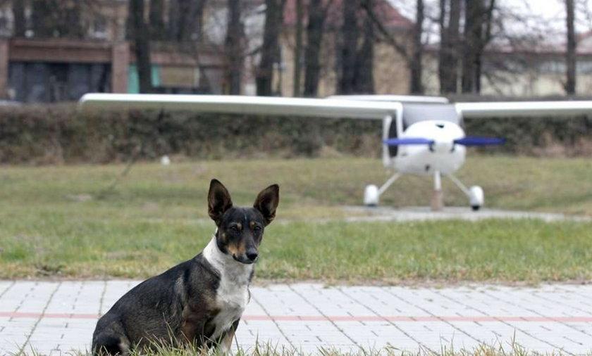 Piesek zamieszkał na lotnisku