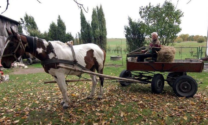 Mój koń ma GPS-a!