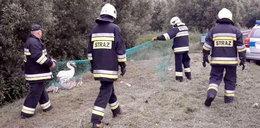 Strażacy uratowali nietypową rodzinę. Zobacz film
