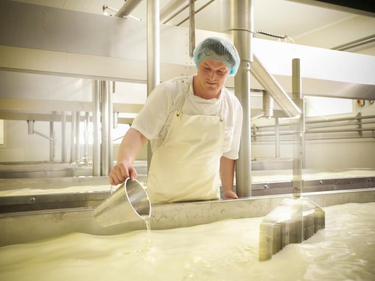 mleko proizvodnja fabrika mlečni proizvodi