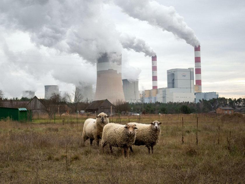 Będzie elektrownia atomowa w Bełchatowie?
