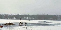 Dlaczego jelenie weszły na lód? Łowczy mówi o okrutnym procederze ludzi