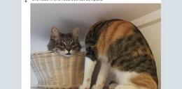 Zdjęcie bezgłowego kota zszokowało internautów. O co tu chodzi?