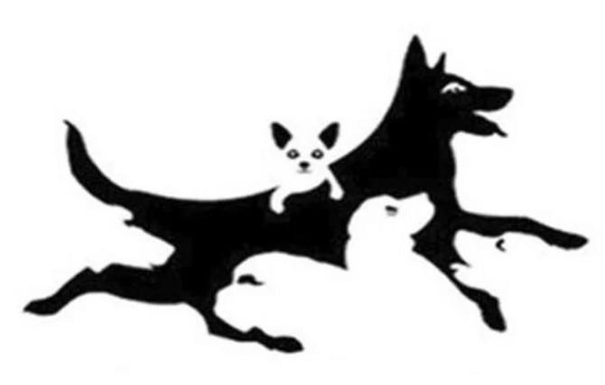 Koliko pasa vidite na slici?