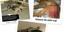 Niemieccy zoofile wywożą polskie psy. Drastyczne zdjęcia [+18]!