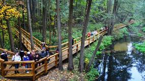 Puszcza Kozienicka - jeden z najpiękniejszych kompleksów leśnych w Polsce