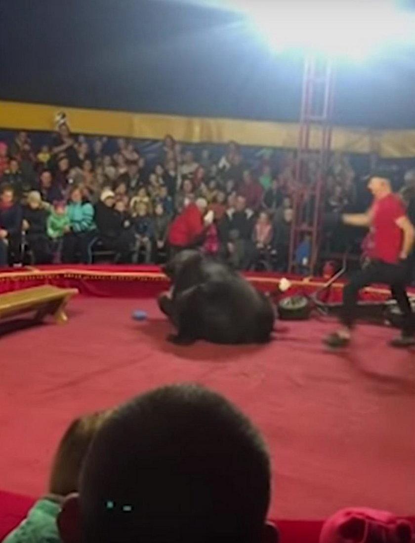 Rosja: niedźwiedź zaatakował trenera podczas występu w cyrku