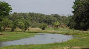 Park Narodowy Komoe na Wybrzeżu Kości Słoniowej usunięty z Listy światowego dziedzictwa w zagrożeniu