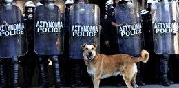 Grecja płonie a ten pies ją gryzie!
