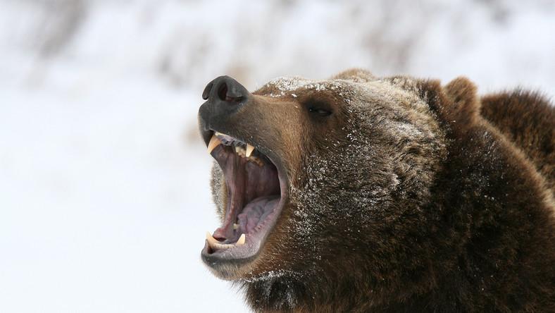 Alaska odłączy się od USA? Tysiące mieszkańców podpisało petycję