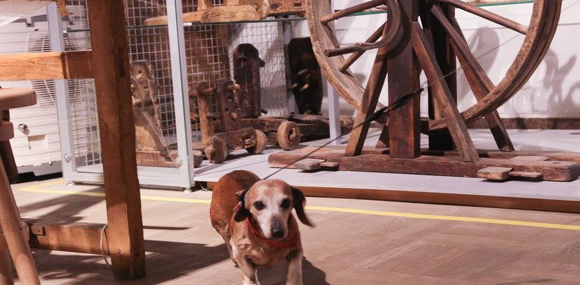 Zakaz wprowadzania psów? Nie w tym muzeum!