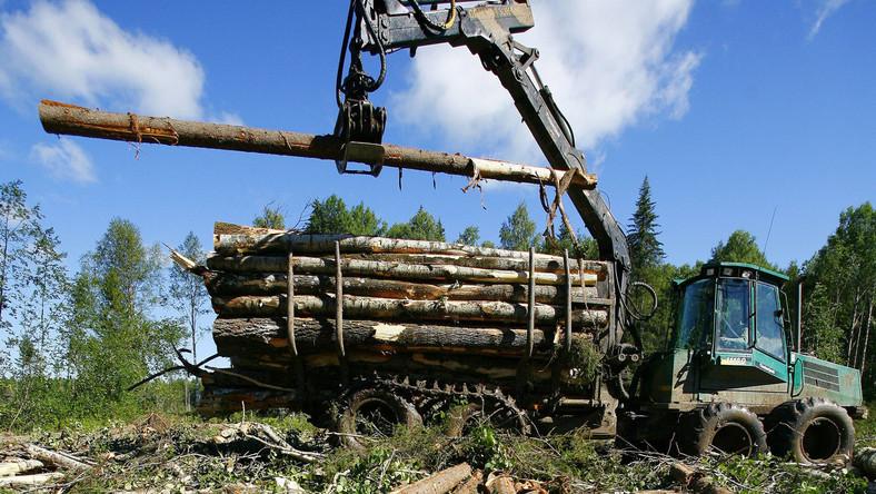 Nielegalny wyrąb to dla wielu kupców opcja tańsza i wygodniejsza niż legalny zakup drewna