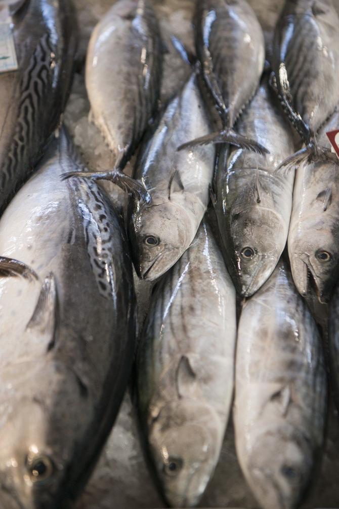 Tuna može biti vrlo opasna