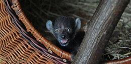 Sensacja w Zamościu! Zdumiewające odkrycie pracowników zoo