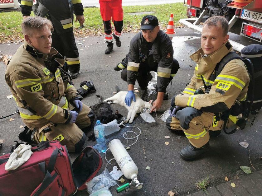 Strażacy z Gdyni ratują wyniesione z pożaru koty.