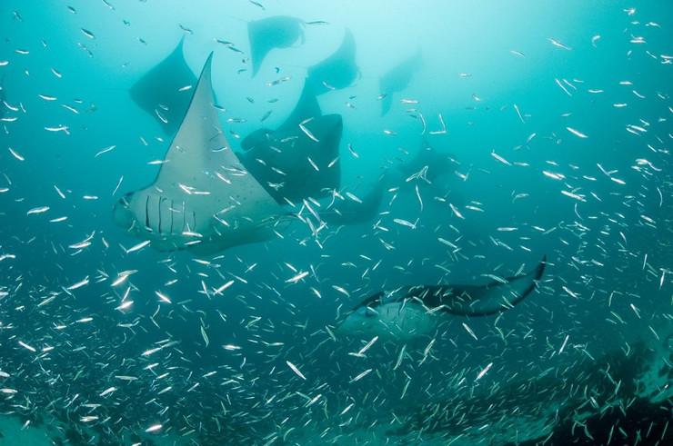 okean planktoni