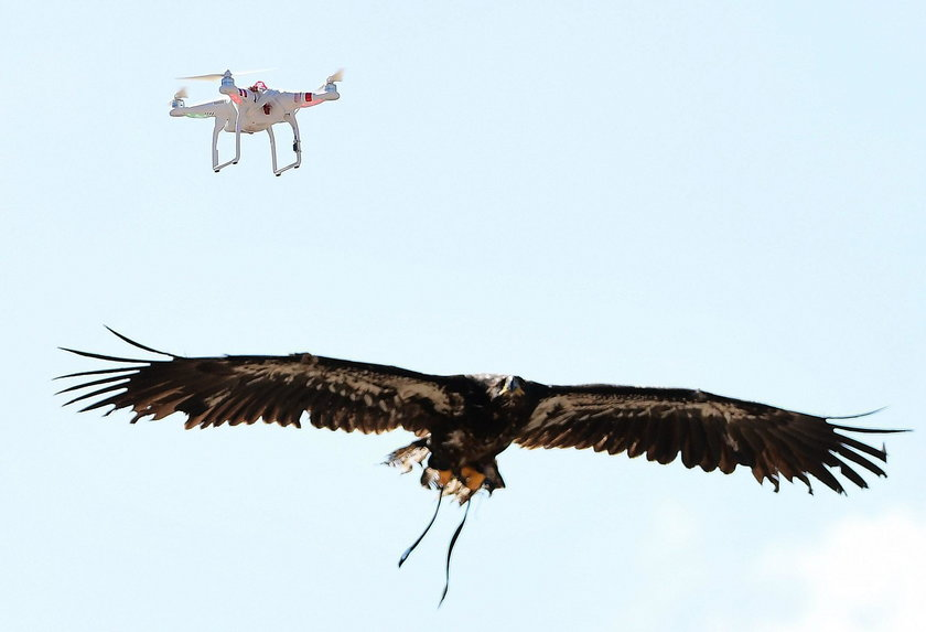 Orły zbroi się w specjalne nakładki na szpony i kostki, które zapobiegają poranieniu ptaków przez śmigła