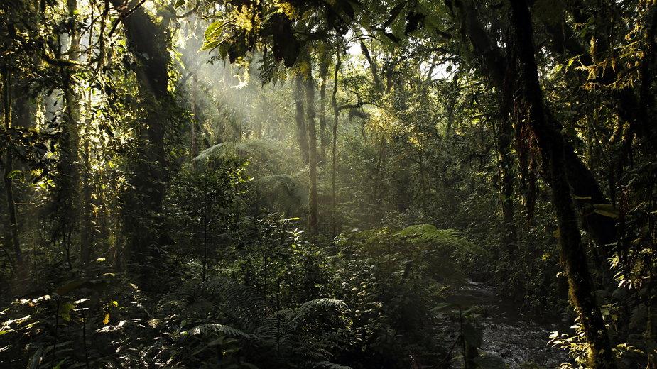 Na części terenów w Niemczech mogą pojawić się lasy subtropikalne