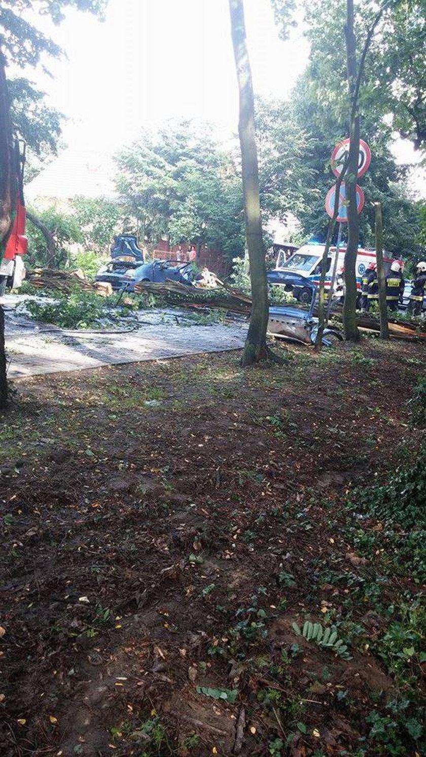 Katarzynę Bienias  zabiło drzewo