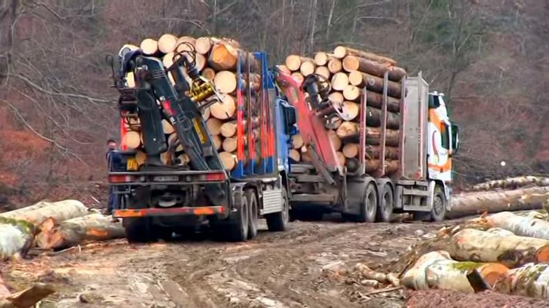 Defrișări în Munții Neamțului (foto: youtube.com)