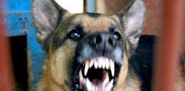 Pies wściekł się na pijanego pana. Zastrzelili owczarka