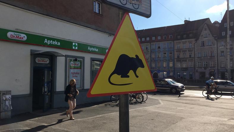 Uwaga na szczury. Nowy znak w centrum Wrocławia