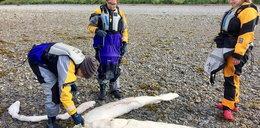 Morze wyrzuciłotajemnicze monstrum. Naukowcy w szoku