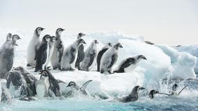 """""""Marsz pingwinów 2: Przygoda na krańcu świata"""": cesarzowie Antarktyki"""