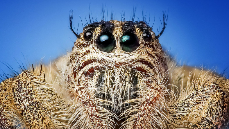 arachnid-close-close-up-257552