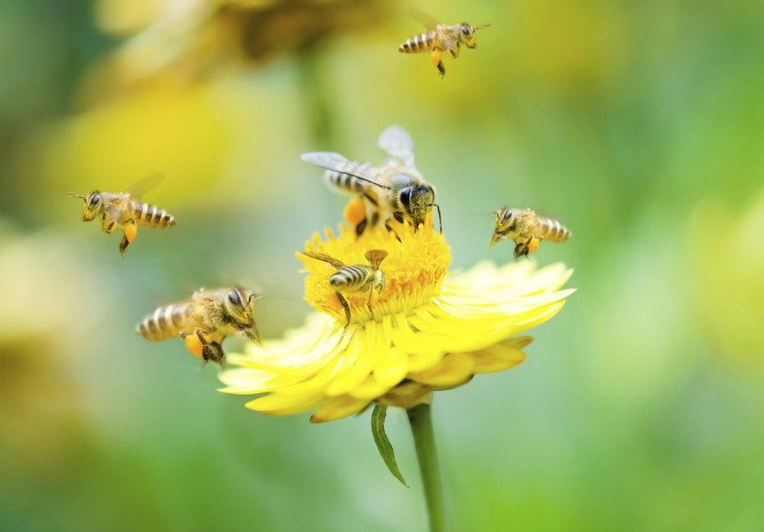 Chce stworzyć raj dla pszczół