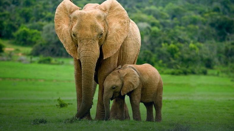 Zobaczcie, co zrobiło to słoniątko