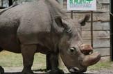 Sudan beli nosorog AP