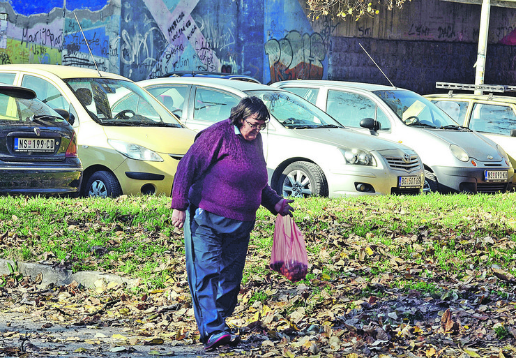 Lešnici, skupljanje, Novi Sad 614 branje sakupljanje oraha foto Nenad Mihajlovic