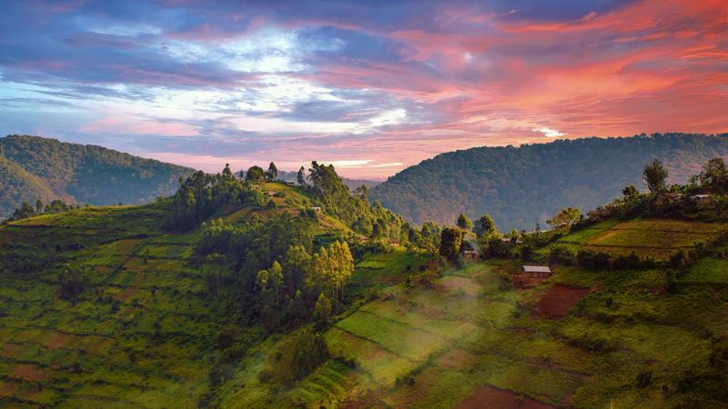 Park Narodowy Bwindi Impenetrable Forest, Rwanda