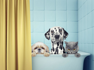 two dogs and cat in the bath