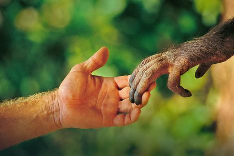 Darvinova teorija evolucije pod lupom