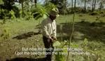 Tokom 37 godina sadio drveće na istom mestu, pa napravio novi EKOSISTEM (VIDEO)