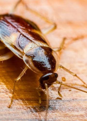 rovar a székben)