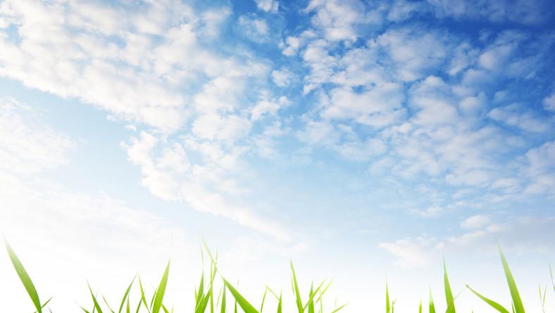 NIK chce karać finansowo za nieskoszone trawniki