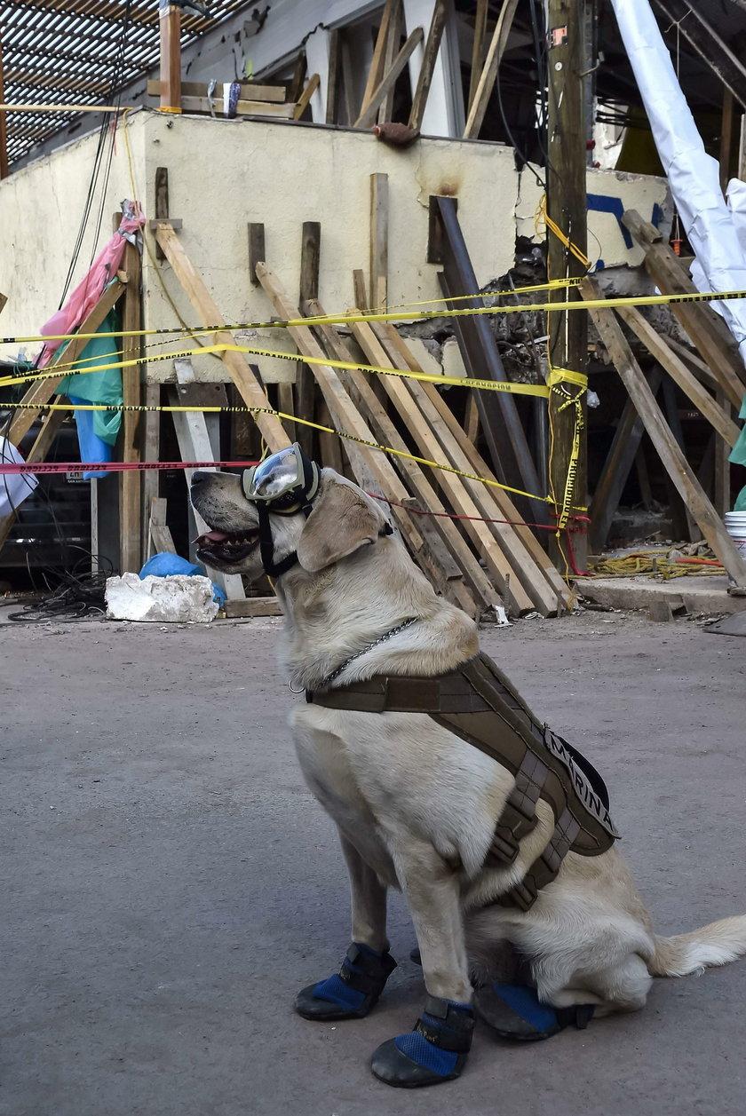 Ten pies to bohater! Uratował 50 osób