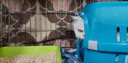 O co chodzi? Ktoś najpierw podrzucił kota z jedzeniem, a potem ukradł kwiaty