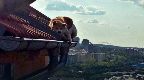 Akita zarobljena na krovu