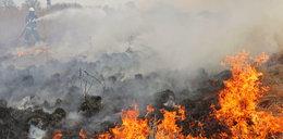 Pożar nad Biebrzą. Tragiczna sytuacja w sercu dzikiej natury