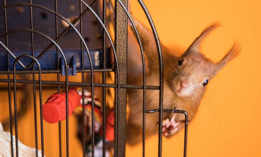 Sanatorium dla wiewiórek i jeży