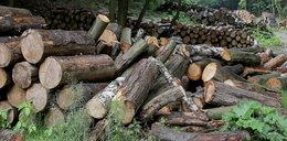 Wielki zysk Lasów Państwowych. Ile z tego wzięło państwo?
