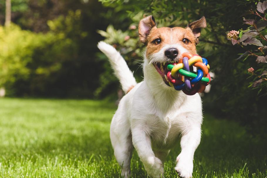 Inteligentne Rasy Psów Ranking Jakie Zwierzę Wybrać Styl życia