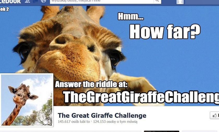 Żyrafy na Facebooku.